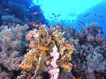 Banco dei pesci sulla scogliera immagini stock libere da diritti