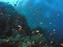 Banco dei pesci sulla scogliera immagini stock