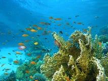 Banco dei pesci sulla scogliera immagine stock libera da diritti