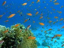 Banco dei pesci sulla scogliera fotografia stock