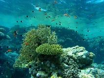 Banco dei pesci sulla scogliera Fotografie Stock Libere da Diritti