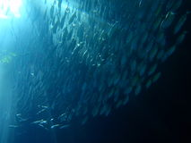 Banco dei pesci in sunrays subacquei Fotografie Stock Libere da Diritti