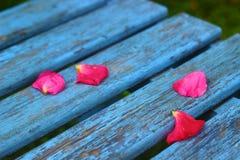 banco dei petali rosa immagine stock