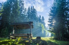 Banco del bosque en los bosques cárpatos Foto de archivo libre de regalías