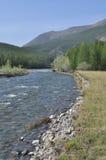 Banco del guijarro de un río de la montaña. Foto de archivo libre de regalías