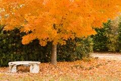Banco del otoño fotos de archivo libres de regalías