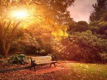 Banco del otoño en parque Foto de archivo libre de regalías
