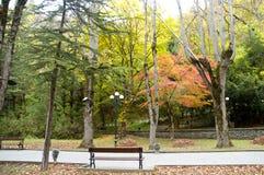 Banco del parque nacional de Borjomi-Kharagauli y colorido de madera Foto de archivo