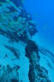 Banco del pesce al relitto subacqueo Immagine Stock