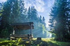 Banco della foresta nelle foreste carpatiche Fotografia Stock Libera da Diritti