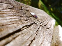 Banco di legno fotografie stock