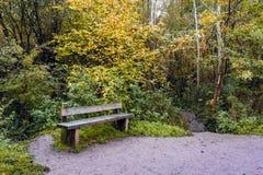 Banco di legno accanto alla traccia di camminata nella foresta di Salcey Fotografie Stock