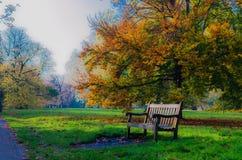Banco di legno da un albero di acero in autunno a Hyde Park Fotografia Stock