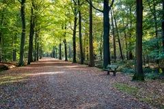 Banco di legno stagionato verde in una foresta autunnale Fotografia Stock Libera da Diritti