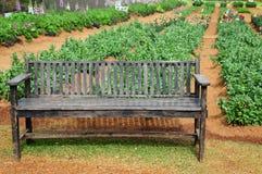 Banco di legno sul giardino Immagini Stock Libere da Diritti
