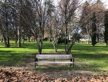 Banco di Mpty in un parco di Madrid fotografia stock