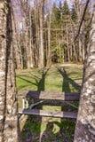 Banco di parco attraverso gli alberi Immagine Stock