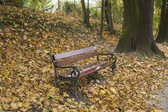 Banco di parco in autunno Immagini Stock