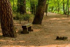 Banco di parco pubblico di legno fra due grandi alberi Immagine Stock