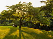 Banco di parco sotto l'albero di corniolo di fioritura fotografie stock libere da diritti