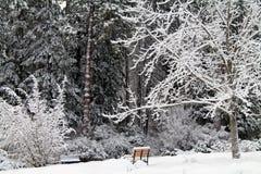 Banco di parco vuoto in una foresta di Snowy Fotografia Stock