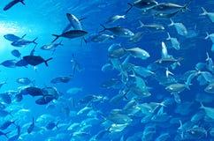 Banco di pesci fotografie stock libere da diritti