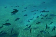 Banco di pesci subacqueo nel mare fotografia stock