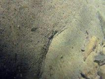 Banco di pesci in torrente montano stock footage