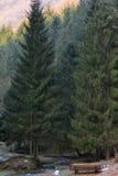 Banco di picnic con gelo nel paesaggio della foresta Fotografie Stock Libere da Diritti