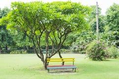 Banco di seduta in parco Fotografia Stock Libera da Diritti