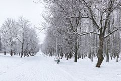 Banco ed alberi di parco coperti da forte nevicata Immagine Stock