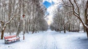 Banco ed alberi di parco coperti da forte nevicata fotografia stock libera da diritti