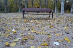 Banco em um parque no outono imagem de stock