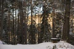 Banco em uma floresta escura Imagem de Stock Royalty Free