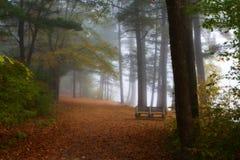 Banco en el follaje del bosque Fotos de archivo libres de regalías