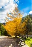 Banco en el parque del otoño en las montañas Fotografía de archivo libre de regalías