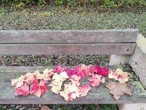 Banco en el parque hojas rojas, imagen de archivo