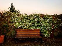 Banco en flor Fotografía de archivo libre de regalías