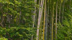 Banco en la arboleda de bambú almacen de video