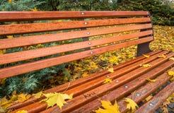Banco en parque del otoño Imagen de archivo libre de regalías