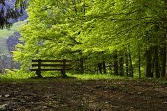 Banco en un bosque de la haya Foto de archivo