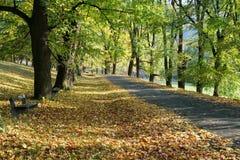 Banco en un parque el otoño Imagen de archivo libre de regalías