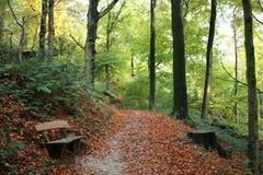 Banco in foresta durante l'autunno Fotografia Stock