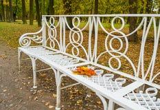Banco forjado branco no parque do outono com folhas de bordo abandonadas Fotografia de Stock Royalty Free