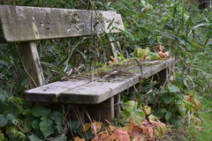 Banco invaso nell'area boscosa in autunno Fotografia Stock Libera da Diritti