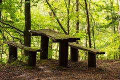 Banco musgoso em uma madeira Foto de Stock Royalty Free
