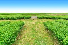 Banco na exploração agrícola do chá fotografia de stock
