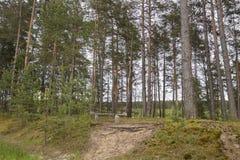 Banco na floresta fotos de stock royalty free