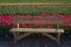 Banco nel campo del tulipano Fotografia Stock Libera da Diritti