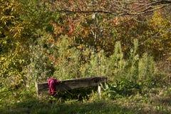 Banco nel legno fra gli alberi Fotografia Stock Libera da Diritti